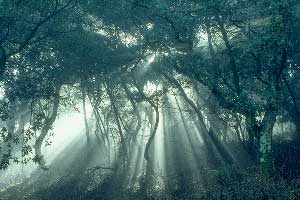essay on faerie stories tolkien Faerie is a perilous land not too narrow for an essay it is wide enough for many books on fairy stories.